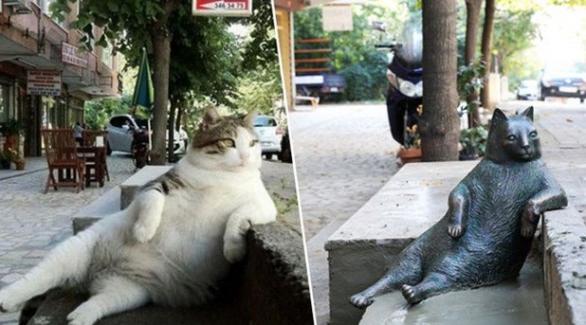 Tombili kedinin heykeli çalındı