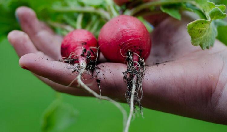 Koronavirüse iyi gelen meyve ve sebzeler nelerdir