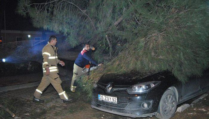 20 metrelik çam ağacı otomobilin üzerine devrildi
