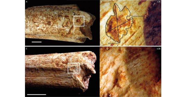500.000 sene evvel insanların atalarını yırtıcılar yiyordu