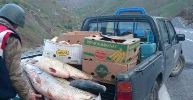 700 kilo kaçak balık ele geçirildi