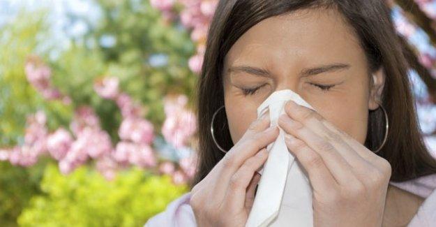 Alerjiye iyi gelen bitkileri biliyor musunuz?