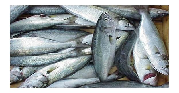 Av yasağı başladı, balık fiyatları uçtu