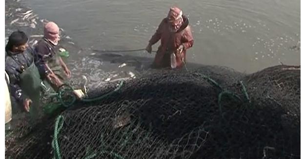 IŞİD balık avlanarak geçimini sağlıyor