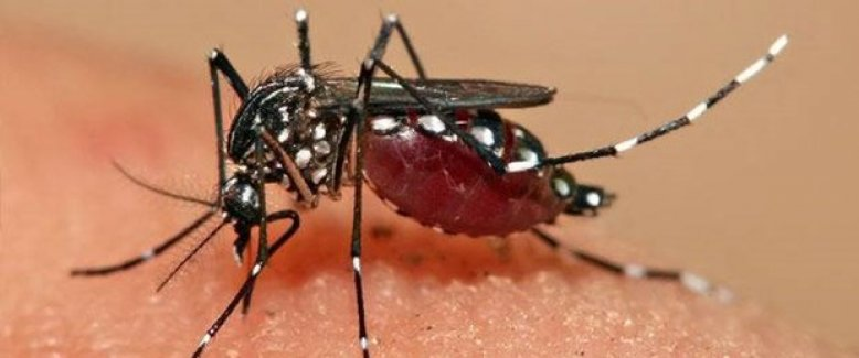Yaz'ın Zika Virüsüne Dikkat!!