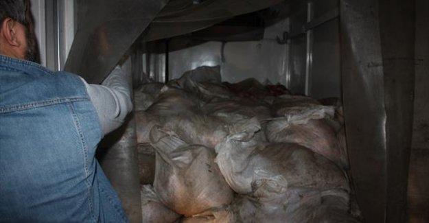 2700 kilo kaçak et yakalandı