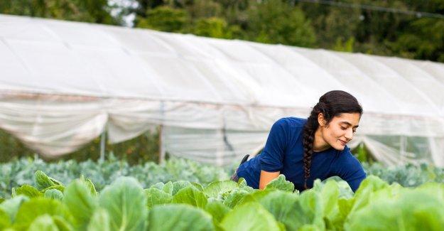 Genç çiftçi için hibe başvurusunda son gün YARIN