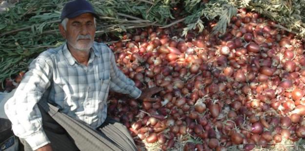 Soğanın fiyatı düştü, üreticiler isyanda