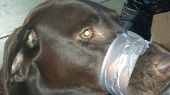 Köpeğin ağzını bantladı hapse düştü