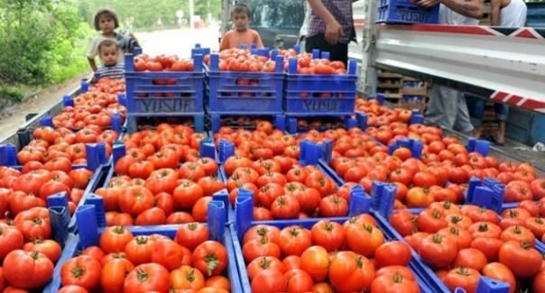 Sebze halinde 10 kuruş olan domates markette 1,5 lira