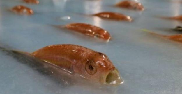 Yine Japonya yine ilginçlik! Donmuş balıktan buz bisti tepki çekti