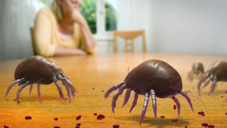Evdeki büyük tehlike! İnsanların deri döküntüleriyle besleniyorlar