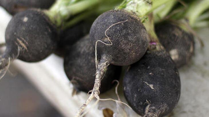 Kara Turpun Faydaları Nelerdir? Siyah Turp Hangi Hastalıklara İyi Gelir?
