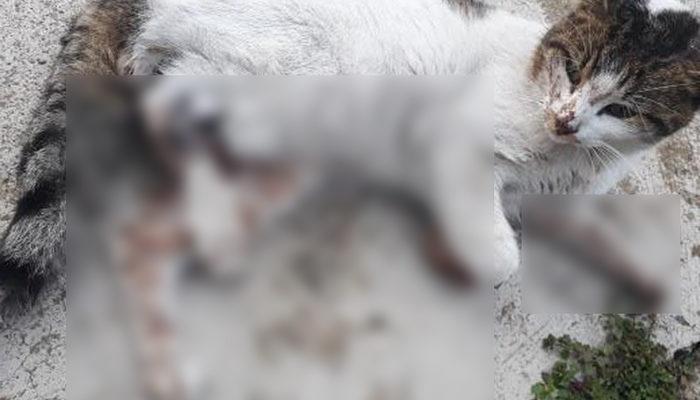 Karabük'te kediyi tüfekle vurarak öldürdüler