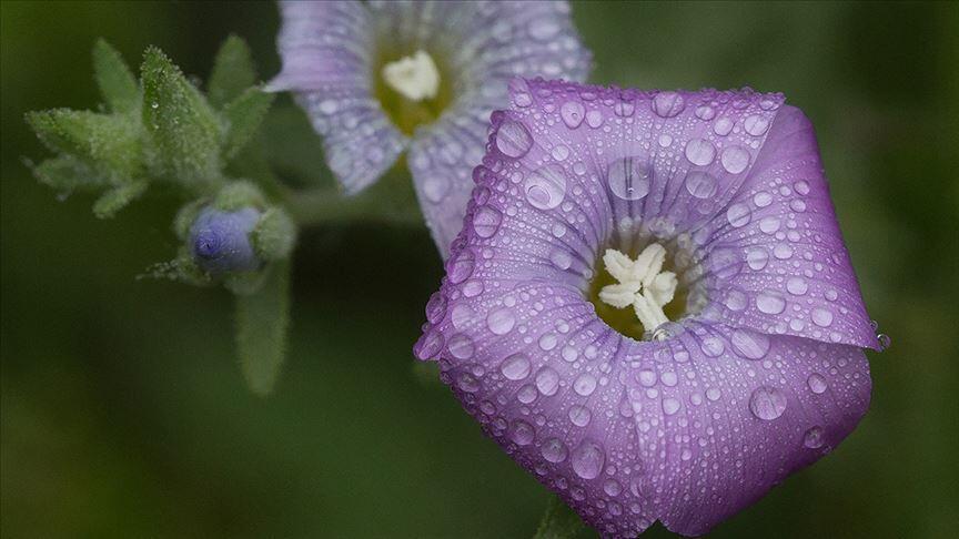 Kışa Dayanıklı Bahçe Bitkileri Ve Çiçekleri Nelerdir?