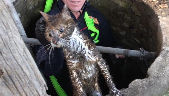 Kuyuya düşen yavru kedi kurtarıldı