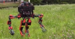 Google'dan İnanılmaz Bir Robot!