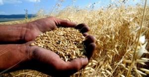 Bu sene buğday üretiminde %4,6 azalma bekleniyor