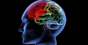 Beynimizde Bir Satın Alma Düğmesi Var Mı?