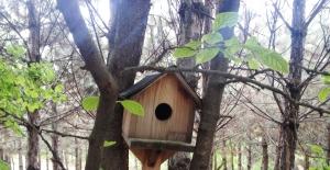 Kuşlar evlerinden memnun mu?