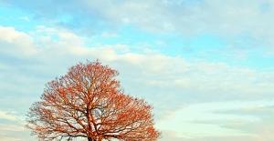 Gezegeni koru, toprak ayak izini küçült