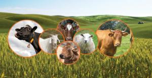 Hayvancılığa büyük yatırım, sadece Niğde'de 9 milyon TL