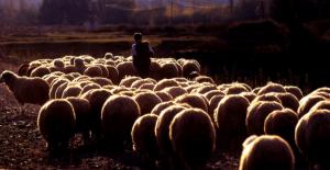 İki kadın çobana cinsel ilişki teklif edip parasını çaldı