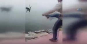 İnsan değil! Boğazına ip bağladığı kediyi tekmeleyerek denize attı