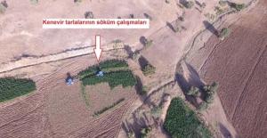 Kamu arazisindeki PKK'ya ait 8.5 milyon liralık kenevir yok edildi!