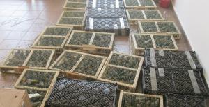 Kuş kaçıran kaçakçıya 460 bin lira ceza verildi