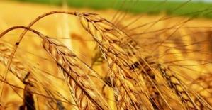 Ramazan'da Buğday Ruşeym, Kişniş Yağı ve Çörek Otu Yağı ile Vücut Direncinizi Artırın