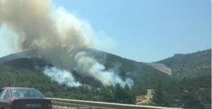 Bodrum'da orman yangını!