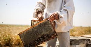 Havaların soğuk olması nedeniyle bal üretimi yüzde 25 azaldı