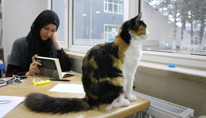 Üniversite kütüphanesinde kedilere yuva oldu