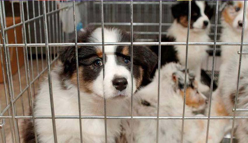 Yasalaştı! Kedi, köpek satışı yasaklandı
