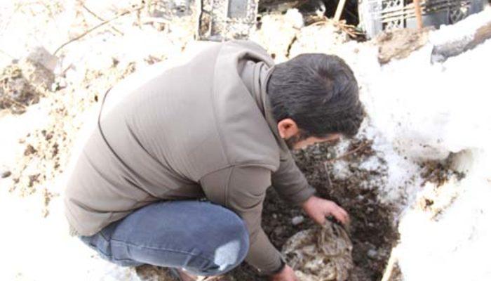 Yazın toprağa gömüp kışın çıkarıyorlar!